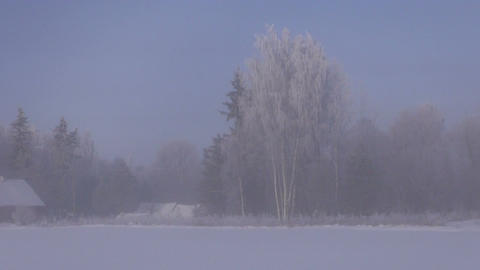 Rural landscape with country houses and forest in winter fog Footage
