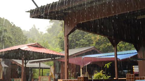 Tropical Rain in Rainforest Background Filmmaterial