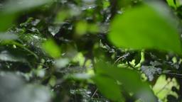 Tropical Rain in Rainforest Background