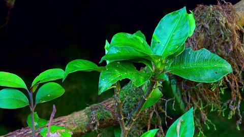 Dense vegetation of shady jungle concept. Diverse flora of Malaysian rainforest Live Action