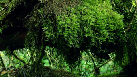 Tropical vegetation growing luxuriantly. Depths of enchanted forest Footage