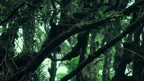 Magical flora of gloomy rainforest shrouded in haze. Foggy tropical jungle Live Action