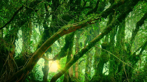 Enchanted forest illuminated by sunlight. Dense thicket of mysterious jungle Footage