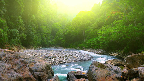 Bright sunlight shining above thick jungle and tropical river. Sumatra nature Footage