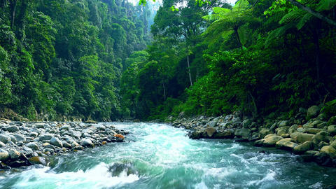 Mysterious mountainous jungle with trees leaning over fast stream with rapids Footage