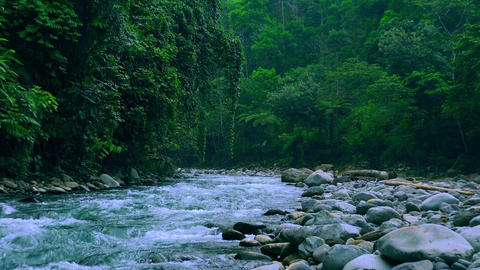 Fast stream with rapids. Magical scenery of rainforest and river with rocks Footage
