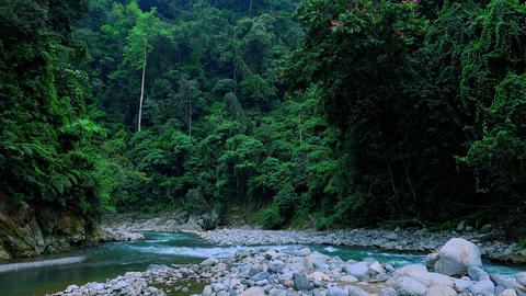 Bed of river surrounded by shady tropical forest with lush vegetation Footage