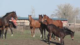Horses at the farm Footage