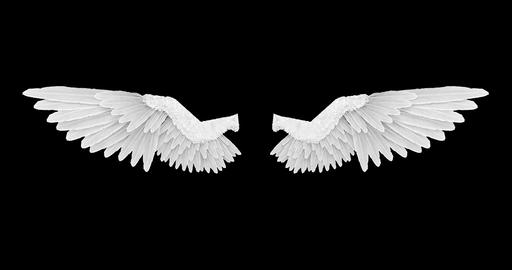 Wings white Animation