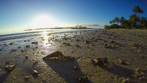 Crab hermit Footage