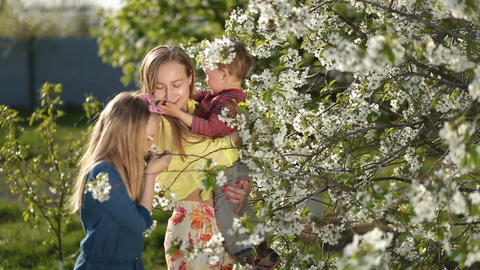 Mother with kids smelling blooming cherry tree Footage