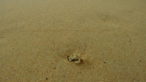 CLOSEUP Crab on the beach Image