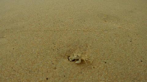 CLOSEUP Crab on the beach
