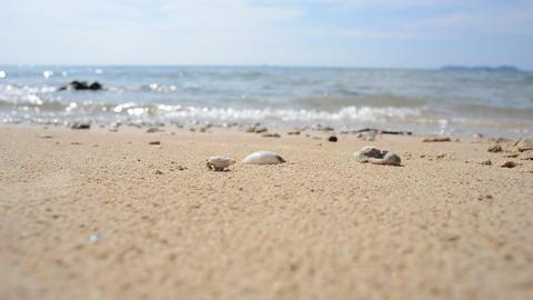 CLOSEUP Hemit crab runing on the beach Footage