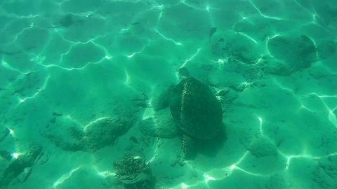 UNDERWATER Sea turtle swimming under the sea Footage