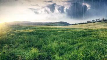 Rain pack Plantilla de After Effects