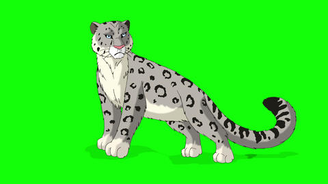 Snow Leopard Stands and Looks Around Animation