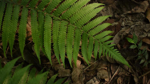 Light Farn leaves jungle forest 4K Footage