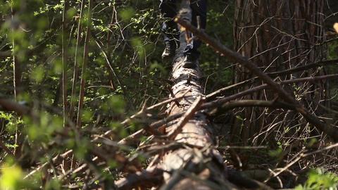 Man walking on a fallen tree in the forest Footage