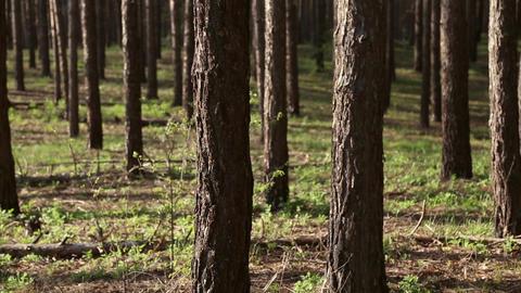 Handheld shooting people walking in the woods Footage