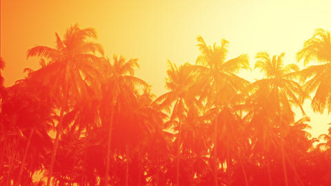 Amazing orange sunset at tropical beach with palm trees. Travel landscapes Footage
