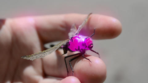 Dragonfly robot drone robotic glowing spy gadget Footage