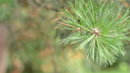 detail branches of a tree - background in forest Footage