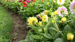 flower garden with grass - garden bed Footage