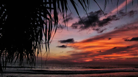 tropical sunset Footage