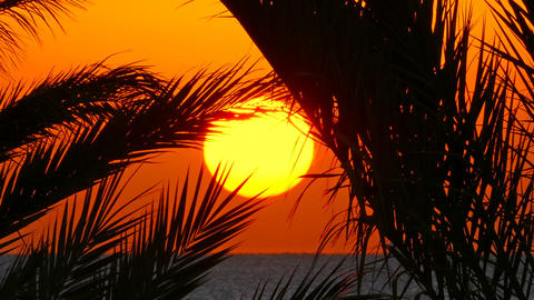 palms and sunrise over sea, zoom in Footage
