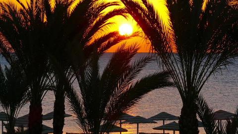 palms and sunrise over sea, 4k Footage