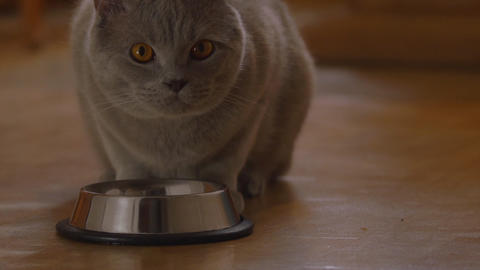 Cat eating cat food in metal bowl Stock Video Footage