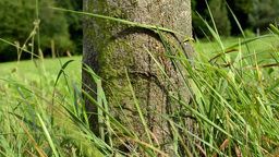 tree trunk with grass - forest in the background - strong wind Footage