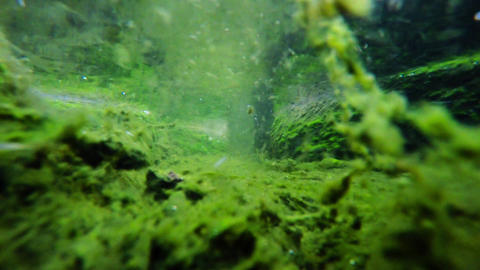 Underwater stream flow with seaweed on rocks Footage