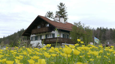Yellow flowers field with house on the background Footage