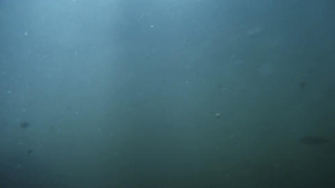 Underwater sea scene view with natural light rays shining through the water glit Footage