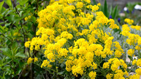 Yellow flowers Footage