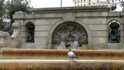 Spain Barcelona 040 water well with pigeons at Plaça de Catalunya Footage