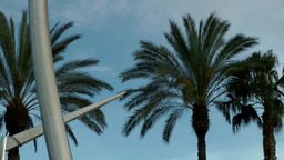Spain Barcelona 082 palm trees on Plaça de les Drassanes Footage