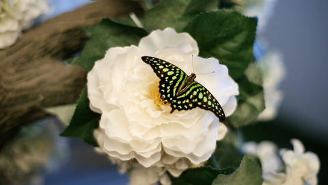 A Butterfly Sits On A Flower Footage