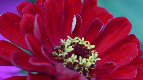 Macro Flower Background 6 Footage