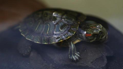 The Turtle 2 Footage