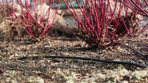 Slider Garden Background Footage
