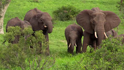 African elephant at waterhole lizenzfreie Videos