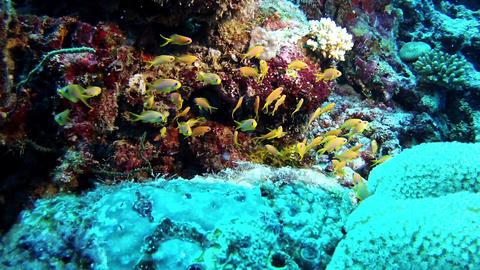 Diving in Maldives - Underwater Landscape Filmmaterial