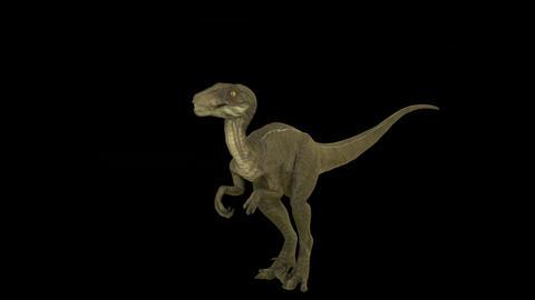 Roaring dinosaur Velociraptor Animation