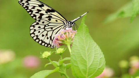 Butterfly Sitting On A Flower Footage