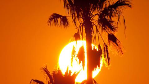 2016-08-07 Sunset Palms V03 HD Footage