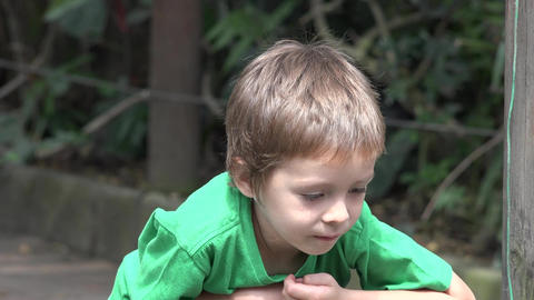 Young Curious Toddler Boy Live Action