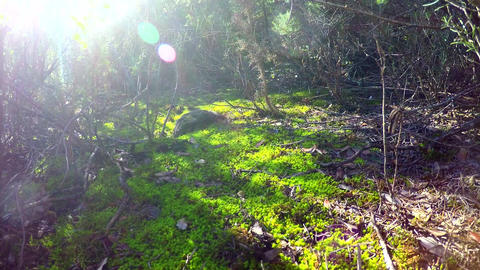 The Forest The Sun And Green Grass Sunrays Footage